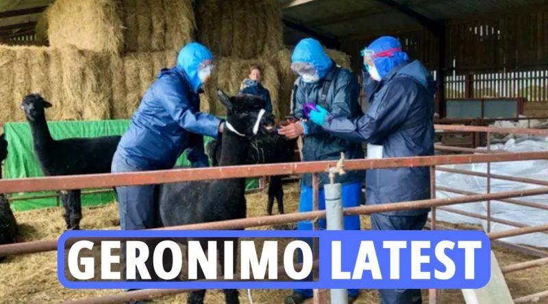 Shock as Geronimo the alpaca KILLED after police raid despite petition