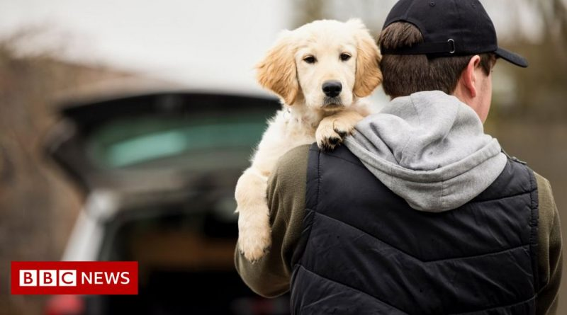 Pet abduction to be made new criminal offence in thefts crackdown