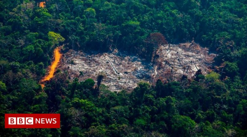 Biodiversity loss risks 'ecological meltdown' - scientists